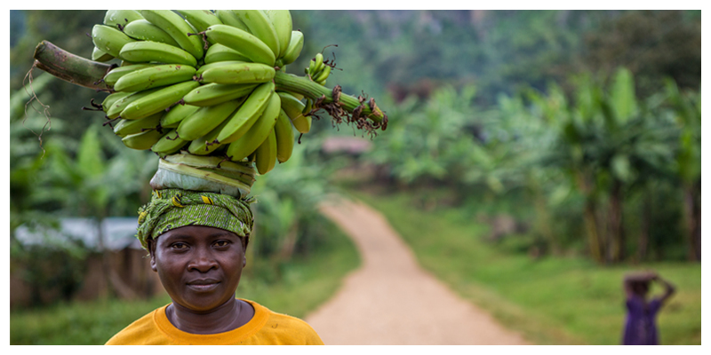 Slow Food Movement: Ugandan Bananas – Much More than a Snack